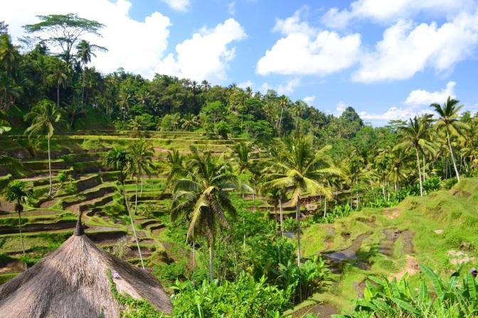 Bali wzdłuż i wszerz
