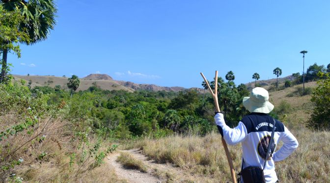 Czatowanie na smoki z Komodo